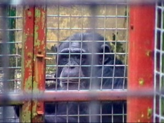 10 facts about zoos | Freedom for Animals