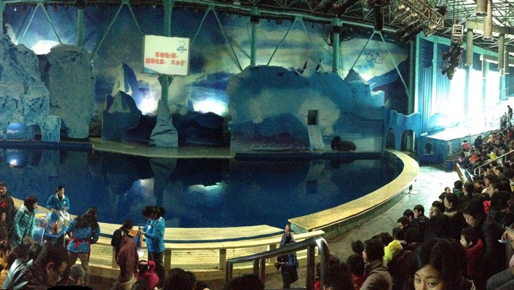 Beluga whale theatre surrounded by crowds