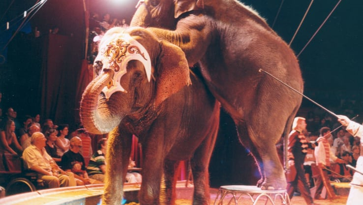 BREAKING: Welsh Government Votes to Ban Wild Animals in Circuses