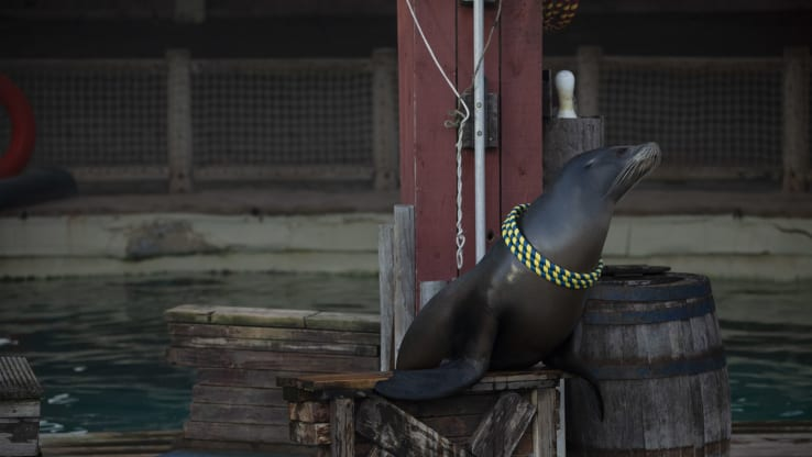 Sea Lions in UK Zoos Exploited in Circus-like Shows