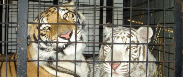Animal circuses, animal suffering