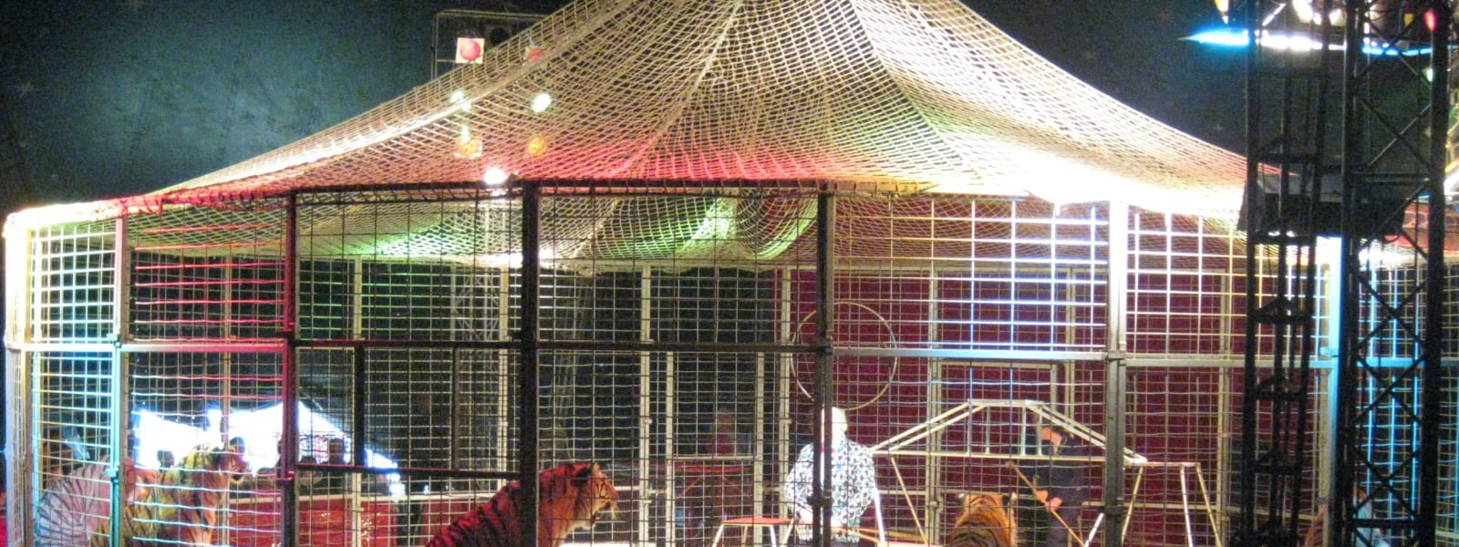 Welsh Wild Animal Circus Ban Progresses