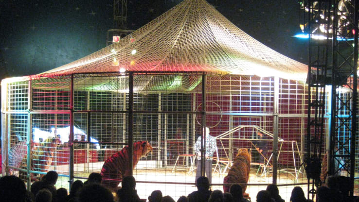 VICTORY: Wild Animals are Banned from Welsh Circuses!