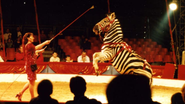 Welsh Wild Animal Circus Ban Receives Cross Party Support