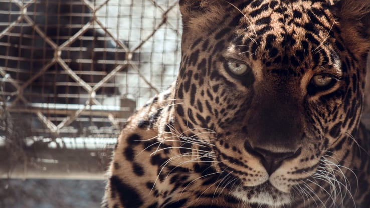 Coronavirus Crisis Makes It Clear: Stop Keeping Wild Animals Captive