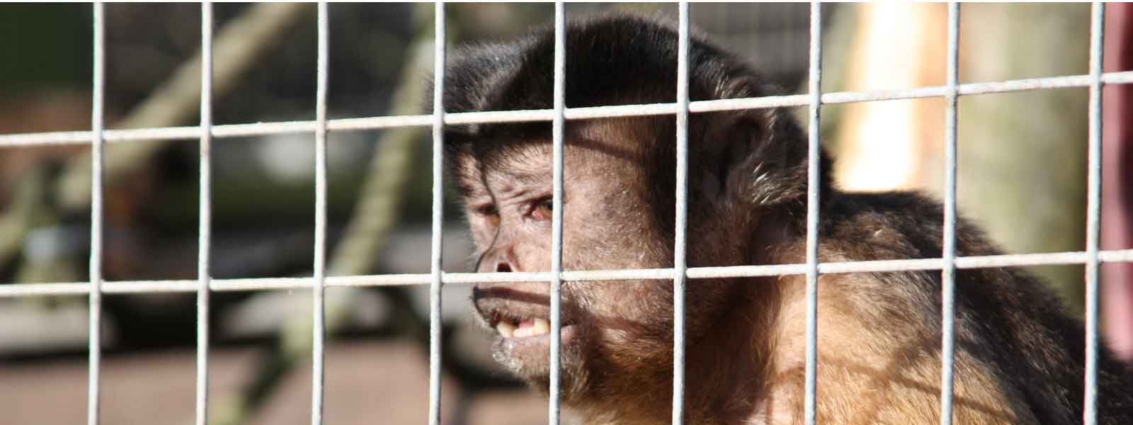 Disappointing debate fails to protect primates in UK