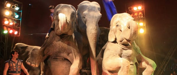 These three elephants were exploited in the circus in Ireland
