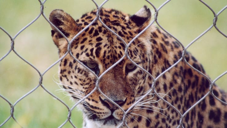 Open Letter to Boris Johnson: No More Zoo Funding