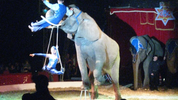 VICTORY: Wild Animals are Banned in Circuses in England!