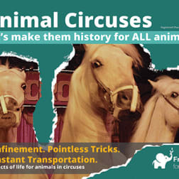 Domestic animals circus