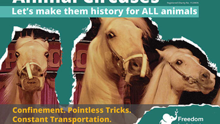 Circus Leaflet - Domestic Animals