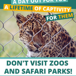 Anti-zoo campaign poster A Day out for you is a lifetime for them. Dont visit zoos and safari parks!