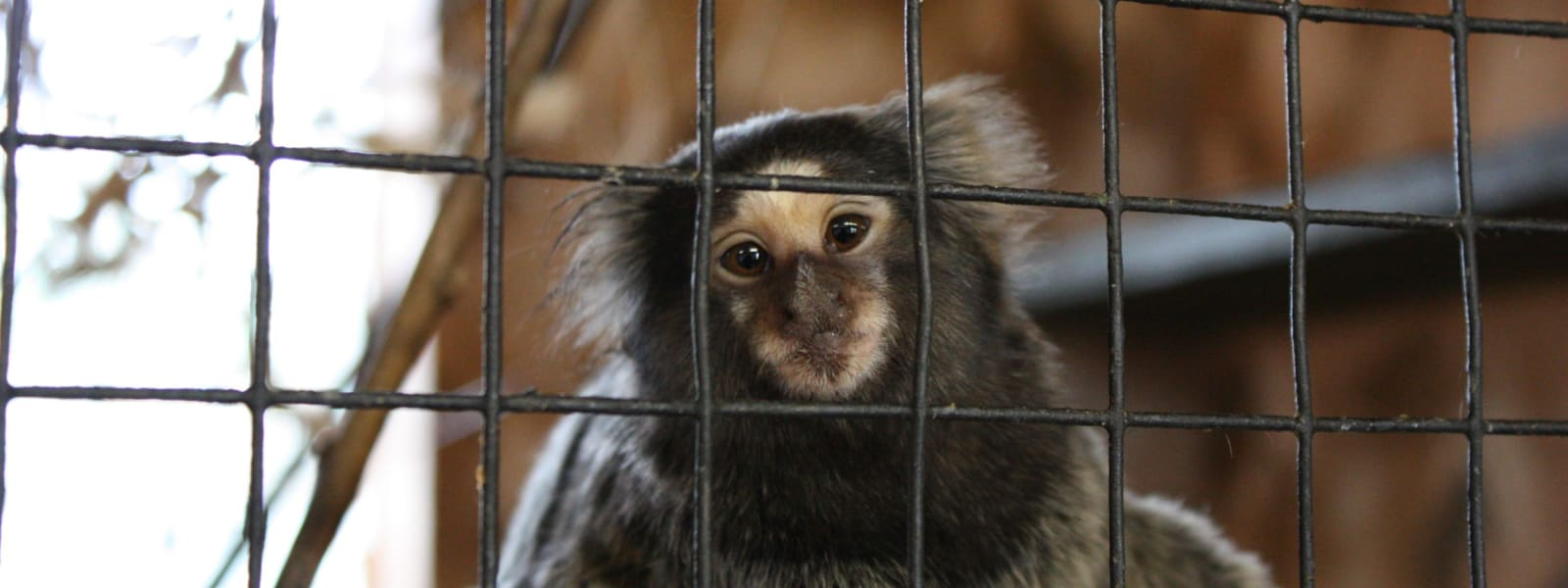 Have Your Say: Ban Primates as Pets!