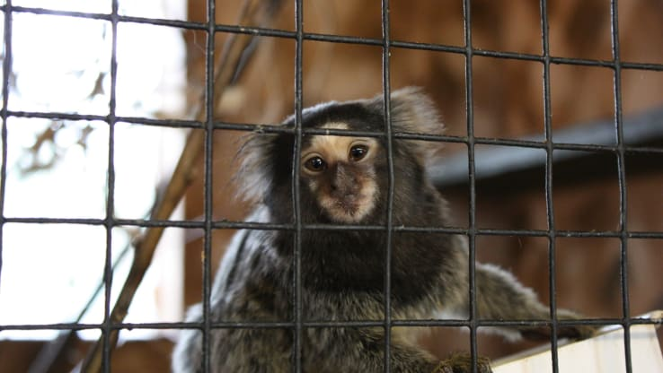 It's Time to Phase Out, Not Reopen, Zoos
