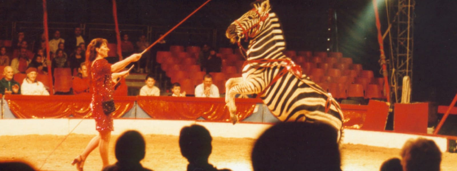 Victory for Scotland in the campaign to end animal circuses