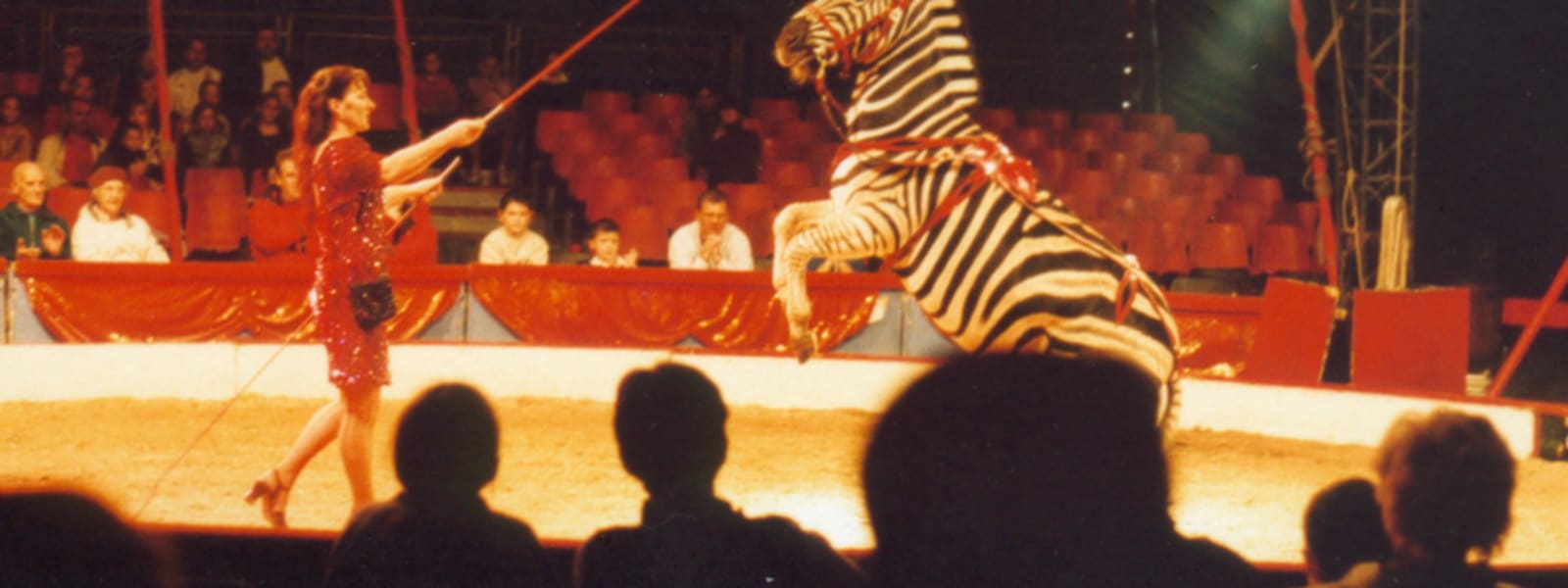 BREAKING: Wales to BAN wild animal circuses