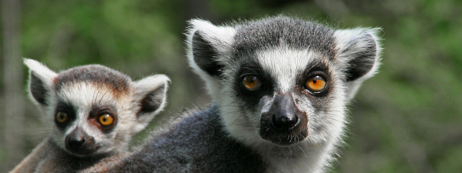 Lemur yoga: the lowdown