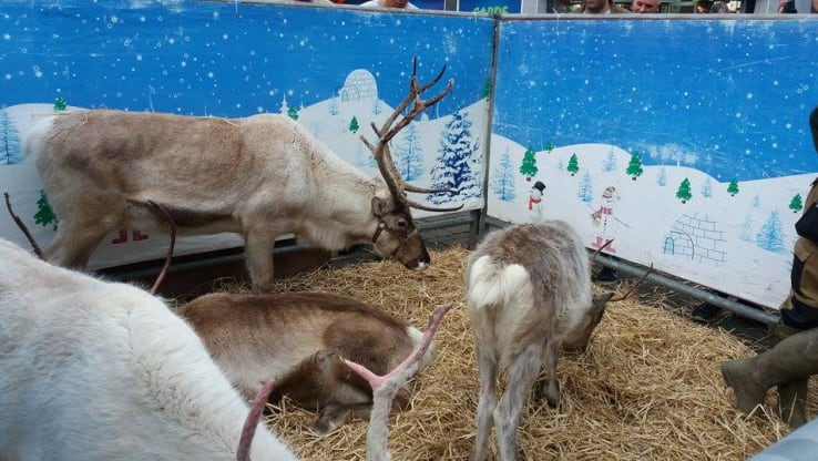 Reindeer exploited in pubs throughout the UK