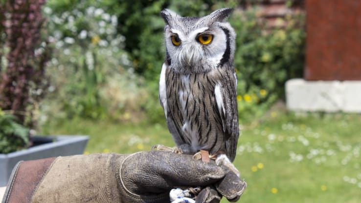 Bird of Prey Centre Found Operating 'Illegally' in Kent