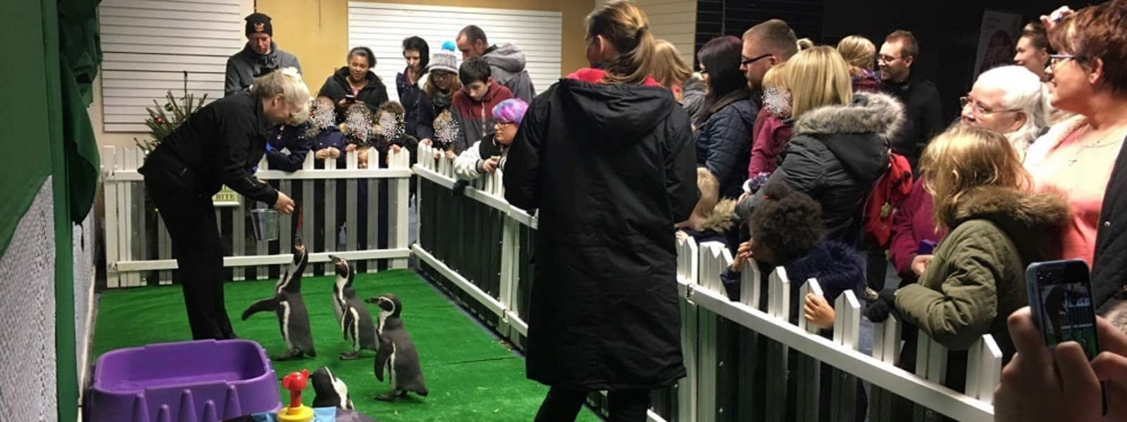Protesters outraged as wild penguins to feature in festive event