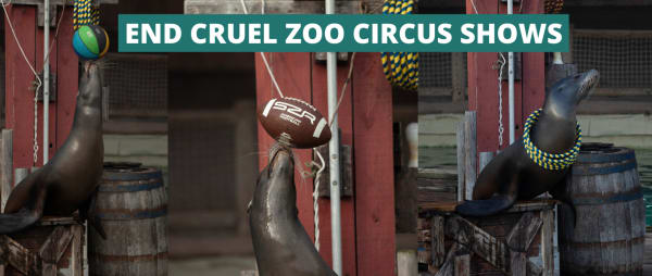 End cruel zoo circus shows