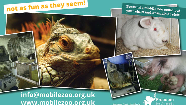 Mobile Zoo Leaflet