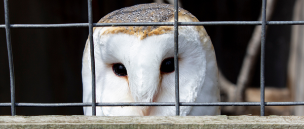 Take Action to Correctly Licence Bird of Prey Centres!