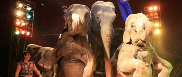 BREAKING: England wild animal circus ban has PASSED