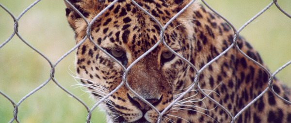 Tell Boris Johnson: No More Zoo Funding!