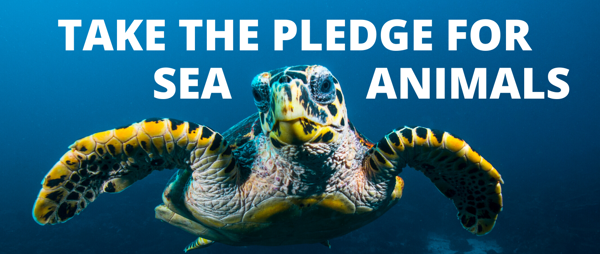 Take the pledge for sea animals!